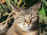 annoyed-cat