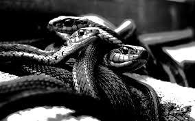 three-snakes